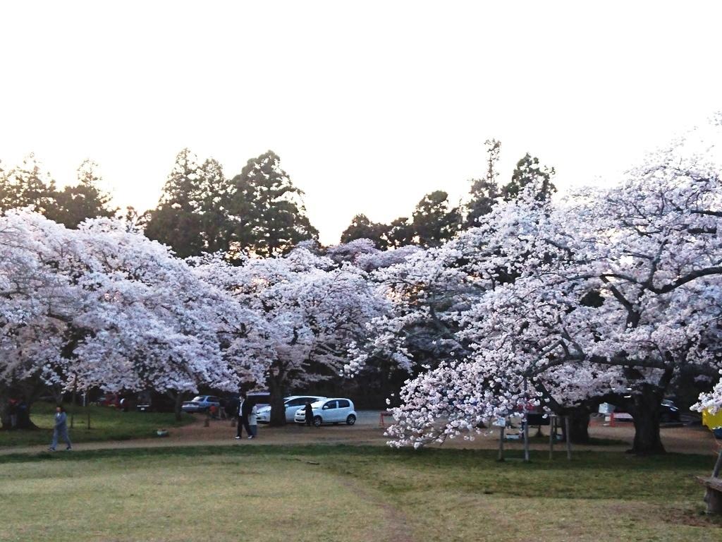 20200411三神峯公園桜.JPG
