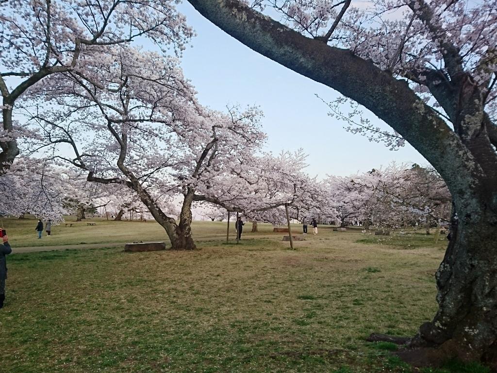 20200411三神峯公園桜4.JPG
