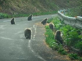 北限の猿.jpg