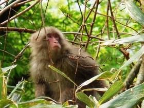 北限の猿2.jpg