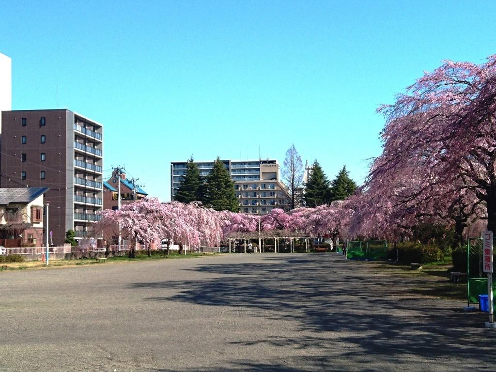 榴ヶ岡公園櫻2.JPG