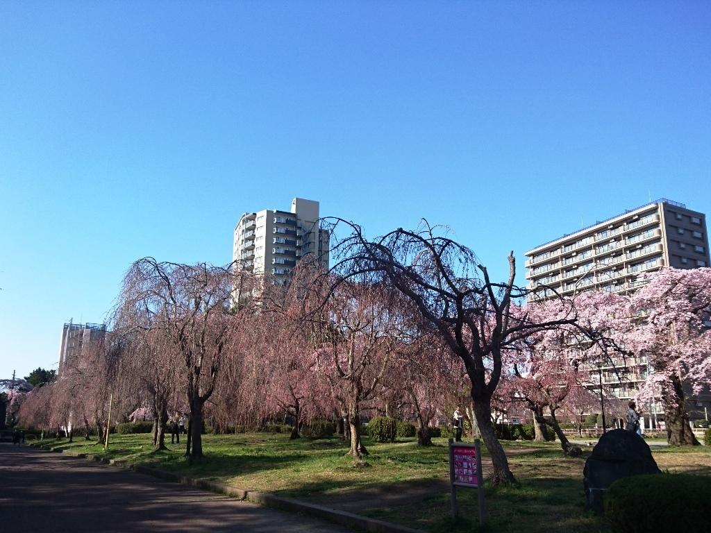 榴ヶ岡公園櫻7.JPG