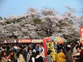 船岡城址公園 桜 出店.jpg