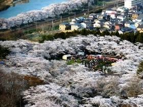 船岡城址公園 桜展望2.jpg